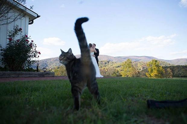 19 con mèo bẩn tính chuyên ném đá Hội những người thích chụp ảnh tự sướng