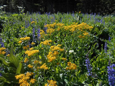 spiritual nature, spiritual awakening, PCT, alpine spring, nature, flowers, spiritual energy