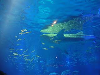 vasca con lo squalo balena