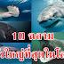 มันใหญ่ามาก!! 10 ฉลามตัวใหญ่ที่สุดในโลก