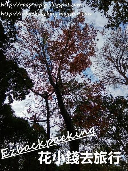 香港郊野紅葉