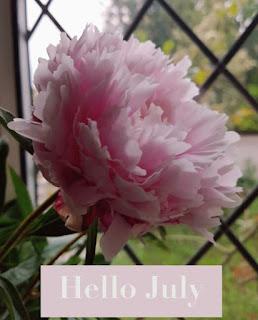 Pink peony July
