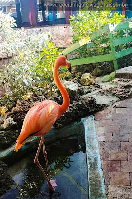 Curaçao também tem flamingos