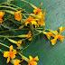 10 kukkaa kasvimaalle