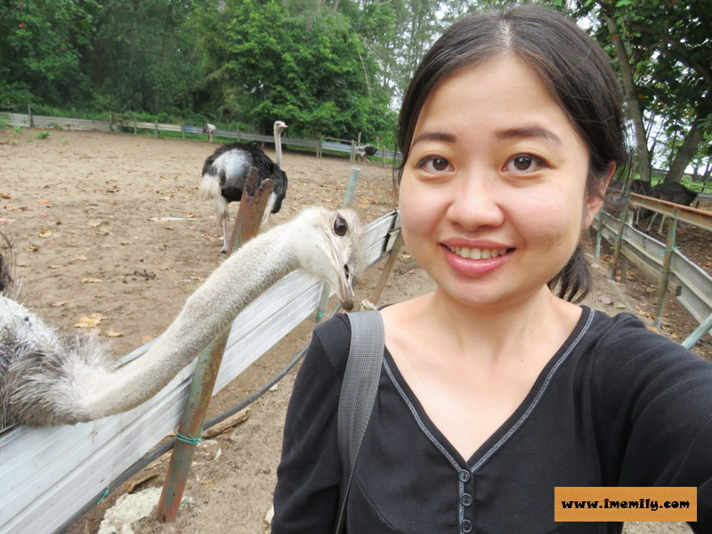 Visiting Chickaboo @ Desaru Ostrich Farm