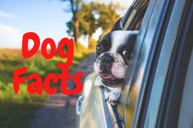 160 Amazing Facts About Dog in Hindi