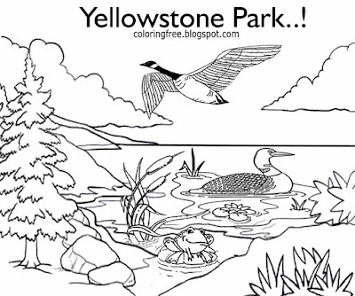 Waterfowl Yellowstone national park big birds Mallard Ducks Canadian Geese coloring books for kids
