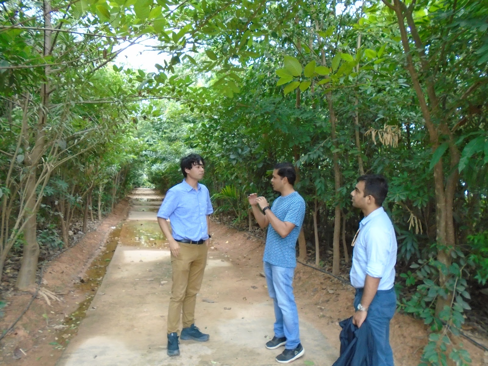 miyawaki technique of afforestation has been accepted globally and has even led to proven results in much lesser time than the ordinary ways of plantation. Midorization Project ßドリゼーションプロジェクト Episode 667 Bangalore Day 2 Pm Miyawaki Forest Ǭ¬667話 Ðンガロール二日目午後 ßヤワキの森