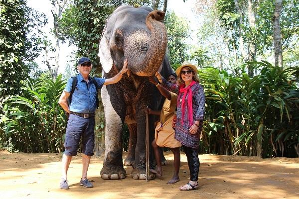 elephant thekkadi
