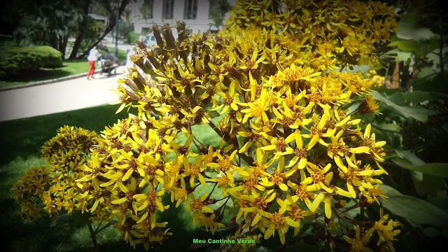 Arbusto flores amarelas