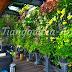 Jasa Pembuatan Taman Vertical Surabaya || Vertical Garden - Galeri