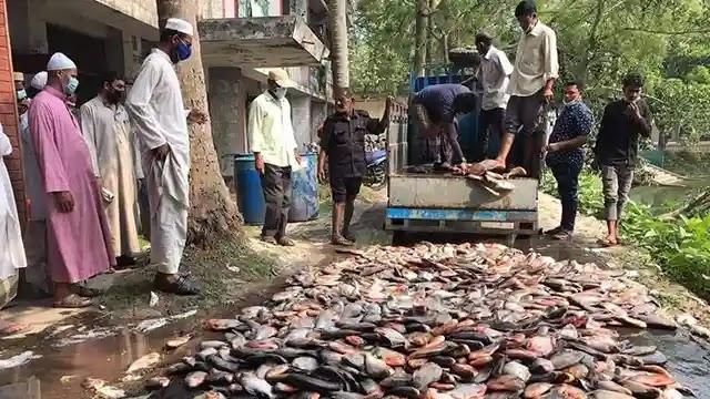 উল্লাপাড়ায় এক হাজার কেজি পিরহানা মাছ আটক