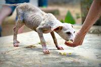 Zayıf ve hasta olan bir yavru köpeğe yemek veren insan