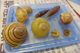 各種不同蝸牛的外殼