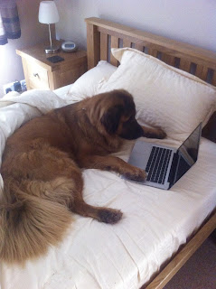 brown dog looking at computer screen sitting on bed with paws on keyboard