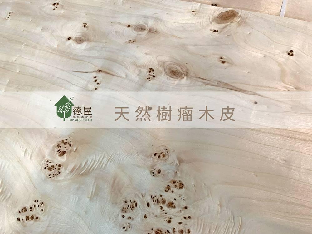 德屋天然樹瘤系列-絢麗神采 風華絕代