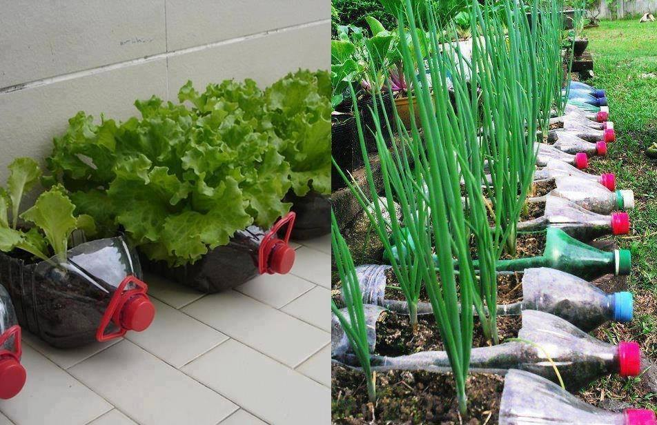 Huertas urbanas, cultivamos nuestros alimentos!