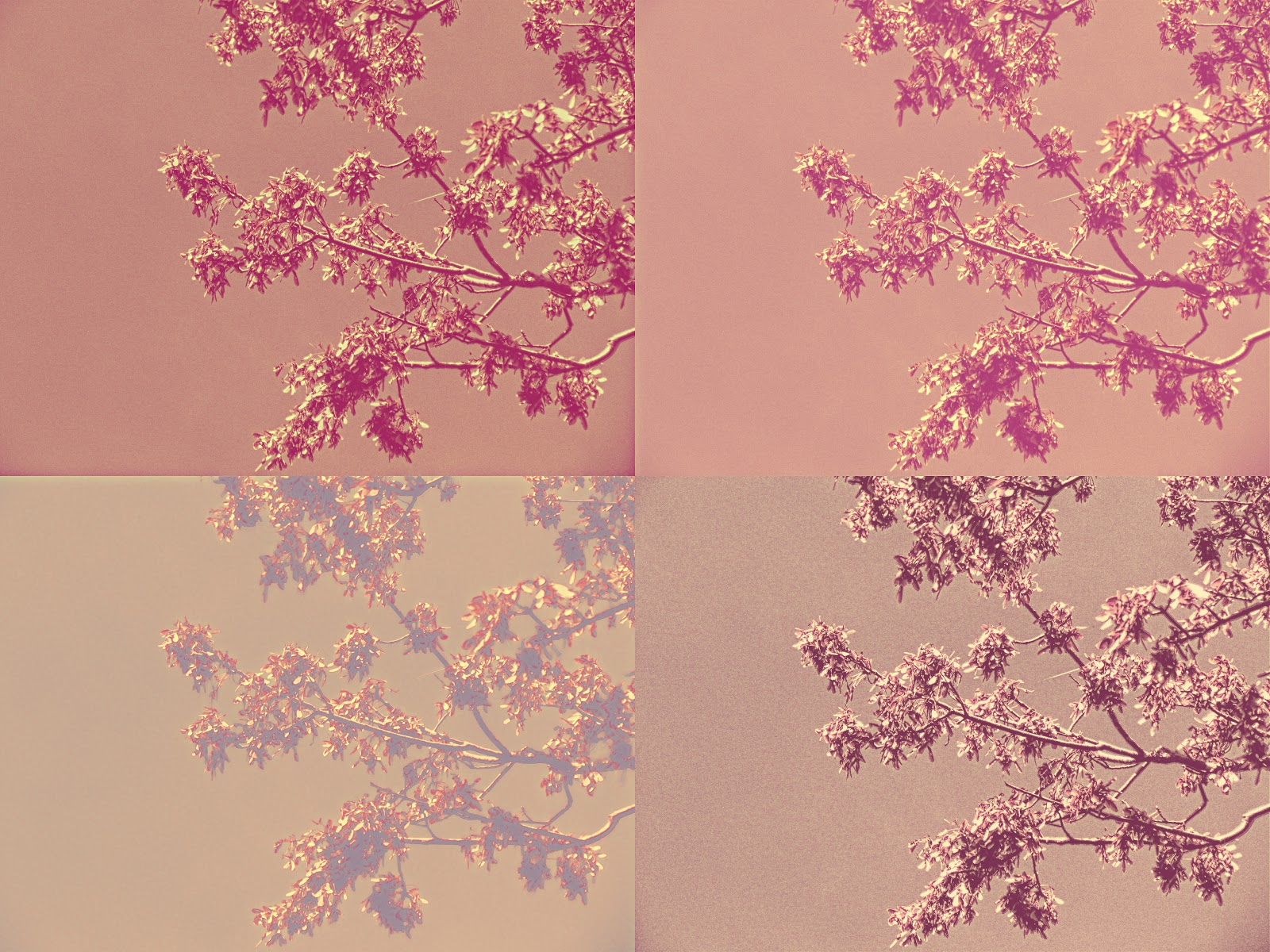 A four-square grid of trees with a pink photo editing filter