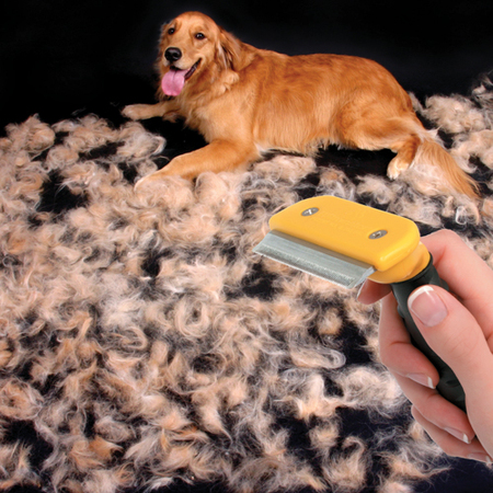 pet shops  Queda de cabelo em Cães