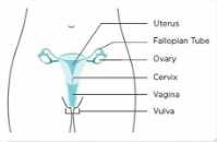[Sex Education] Merawat Miss V