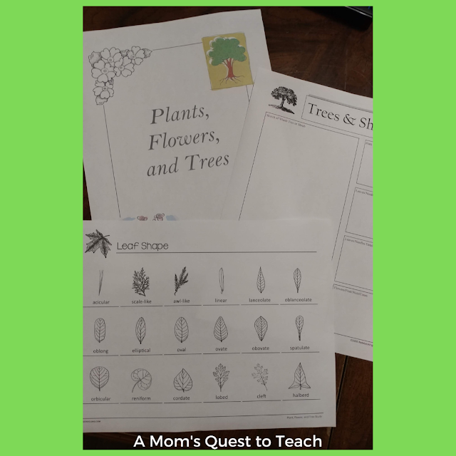 notebooking pages on trees; leaves