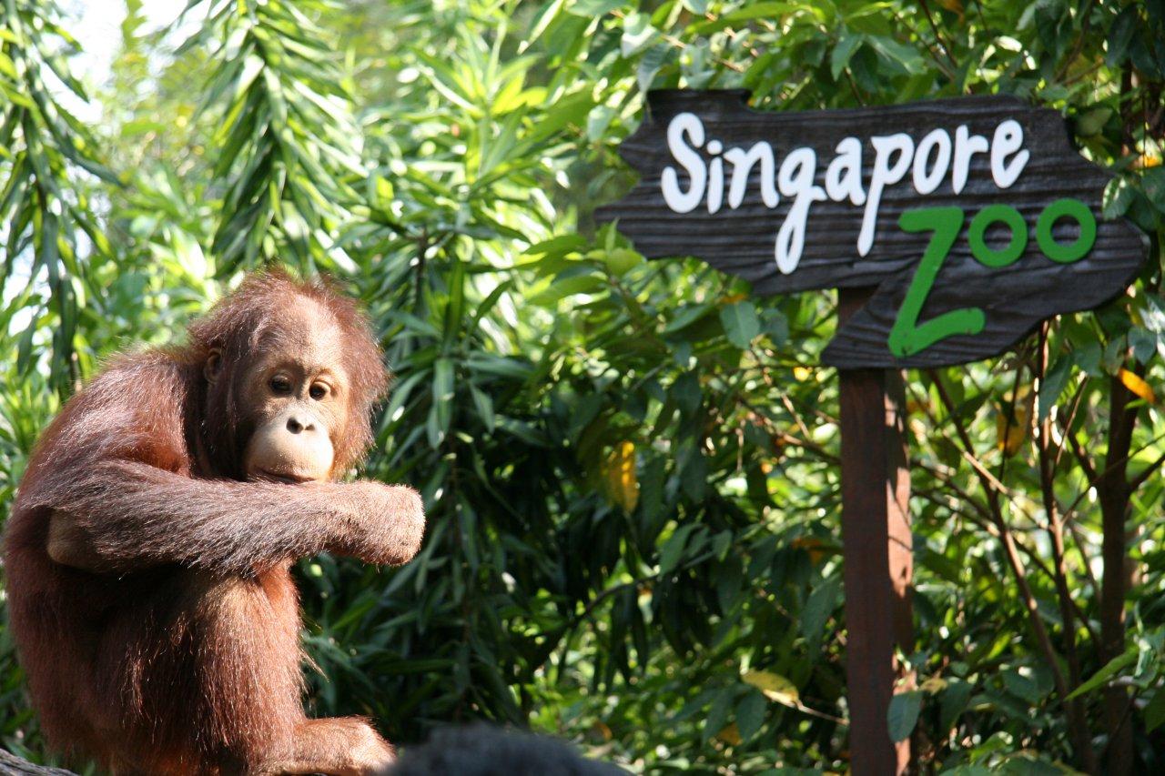 [Image: singapore-zoo.jpg]