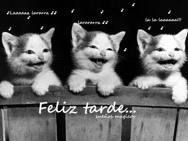 gatitos cantando Feliz tarde