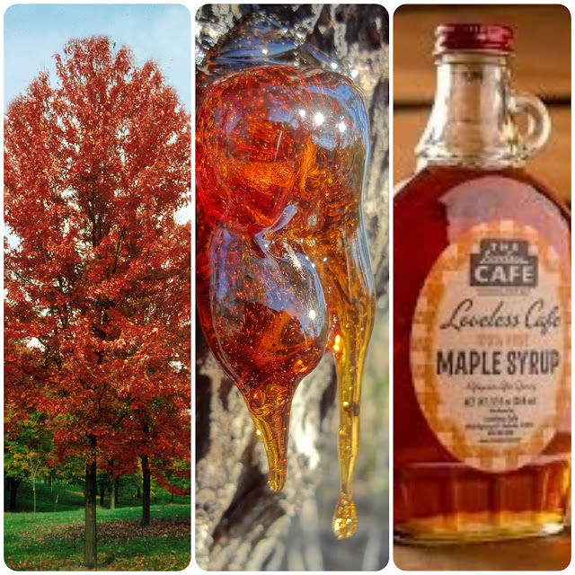 Origem do maple syrup