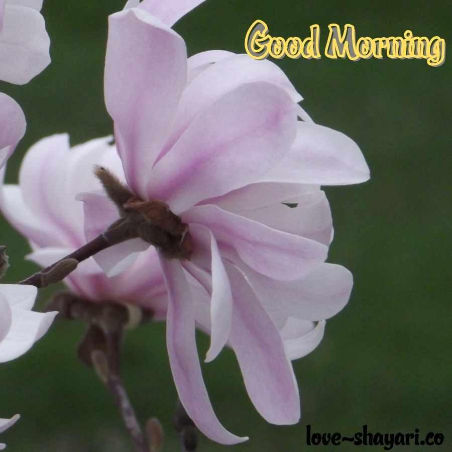 nachural good morning image