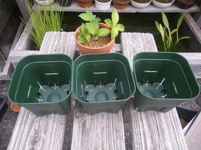 プラ鉢 3個