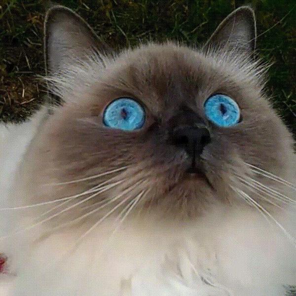 кот с красивыми глазами наблюдает за птичкой