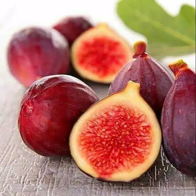 bibit buah tin zordan siap buah super okulasi Probolinggo