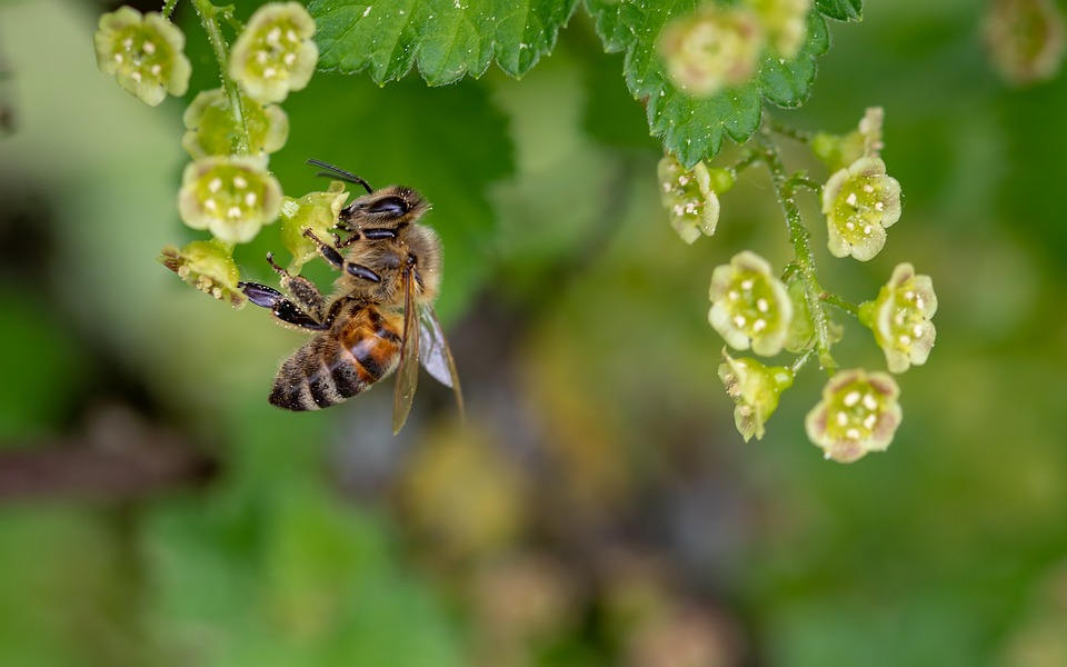 Mengambil Pembelajaran dari Lebah