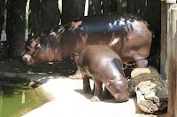 أفضل 10 حيوانات متطورة و مهددة بالإنقراض