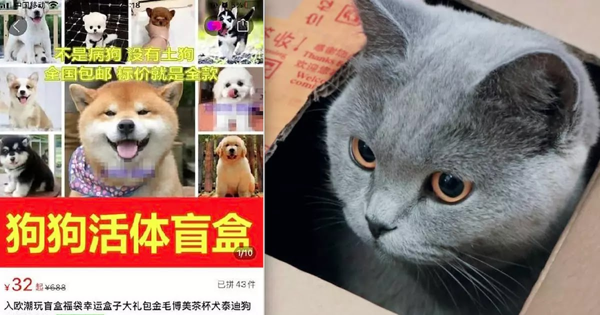 Outrage In China After 'Pets In The Post' Scheme Is Exposed By Activists