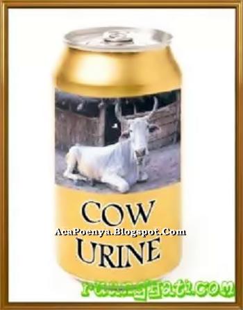 Minuman Urine Sapi