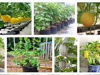 Tips Menjalankan Bisnis Dalam Bidang Pertanian Yang Ideal