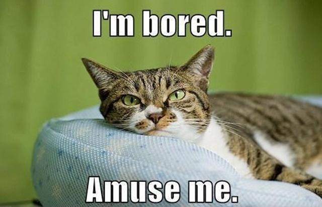 I'm bored. Amuse me!