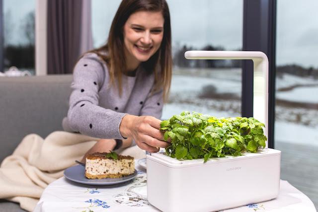 jardín inteligente con planta comestible en la mesa