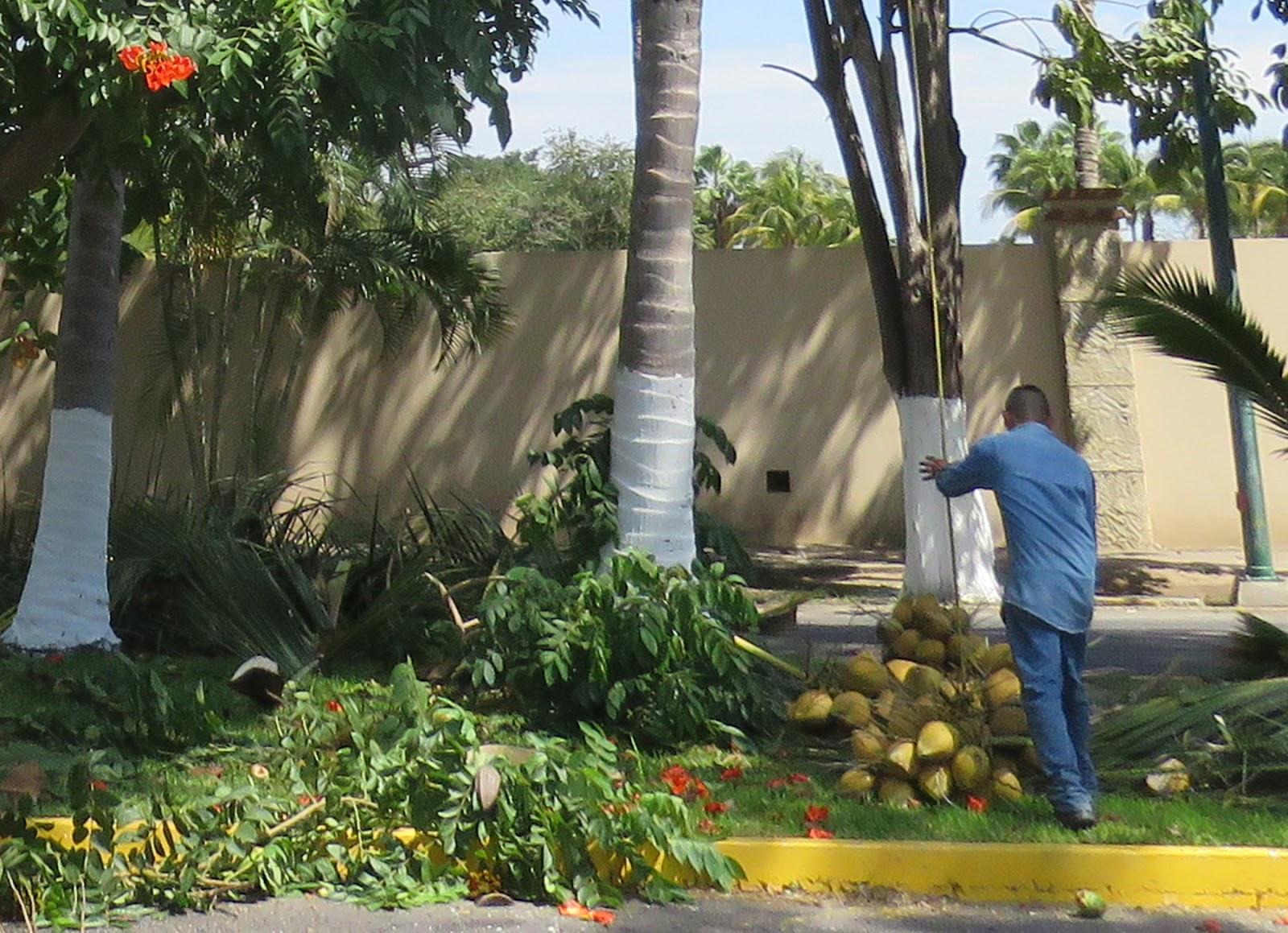 Aménager Une Terre Avec Des Plantes Idées Décoration
