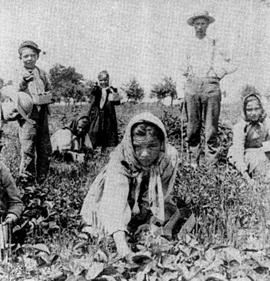 Italian Plantation Workers