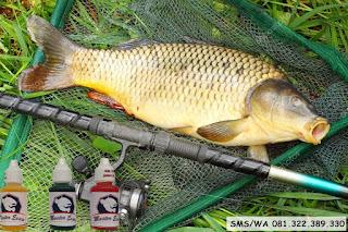 Essen Ikan Mas Subang Kilo Gebrus