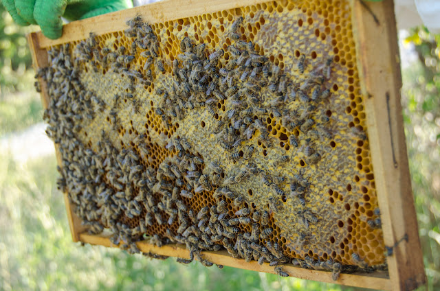 Мед на рамка со пчели