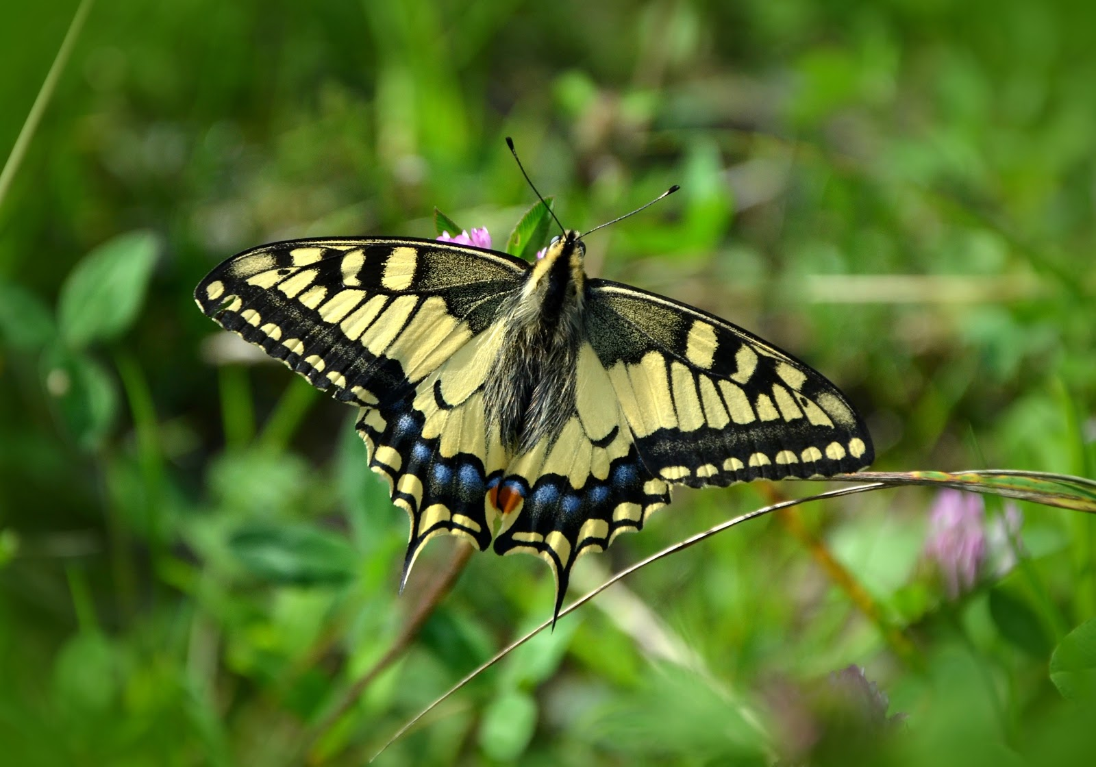 nature-summer-insect-butterfly-pictures