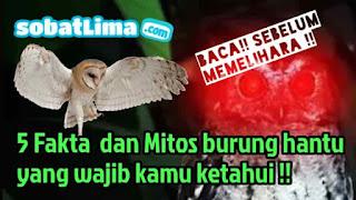 Fakta dan Mitos Burung Hantu di Indonesia,burung hantu bahasa inggrisnya,burung hantu putih,burung hantu celepuk,burung hantu tyto alba,burung hantu makan apa,burung hantu kartun,burung hantu menurut islam,burung hantu surabaya,burung hantu adalah,burung hantu anakan,burung hantu angka togelnya,mitos burung hantu,burung hantu menurut islam,kode alam burung hantu