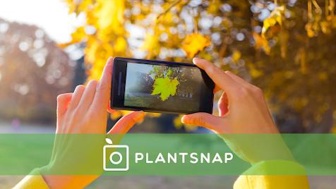PlantSnap: una app para identificar plantas, árboles y flores a través de tu móvil