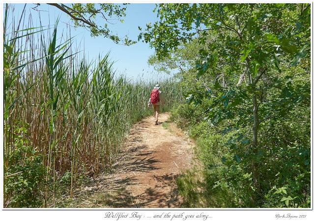 Wellfleet Bay: ... and the path goes along...