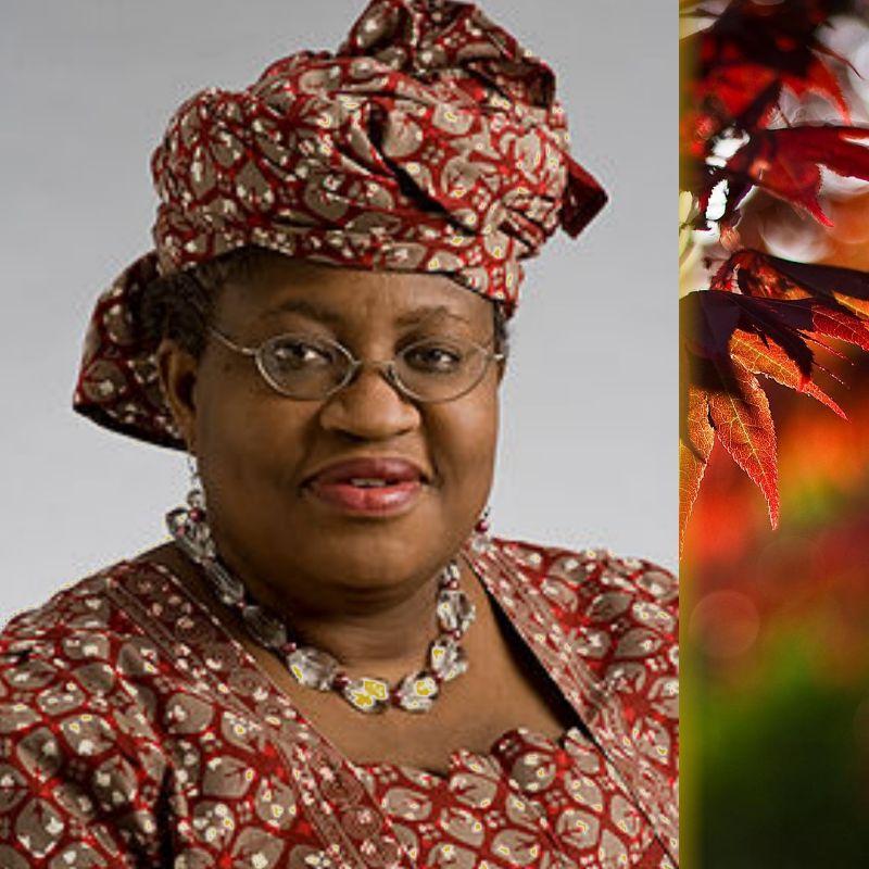 Ngozi Okonjo-Iweala Emerges As The First Female To Head WTO