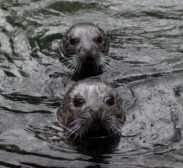 Tierpark Neumünster Kinder Familie Herbst Winter Frühjahr Fütterung Seehunde
