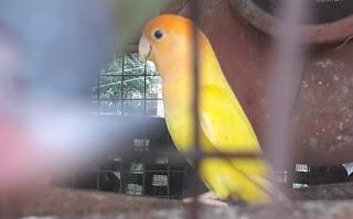 सपने में तोता देखने से क्या होता है ▷ parrot
